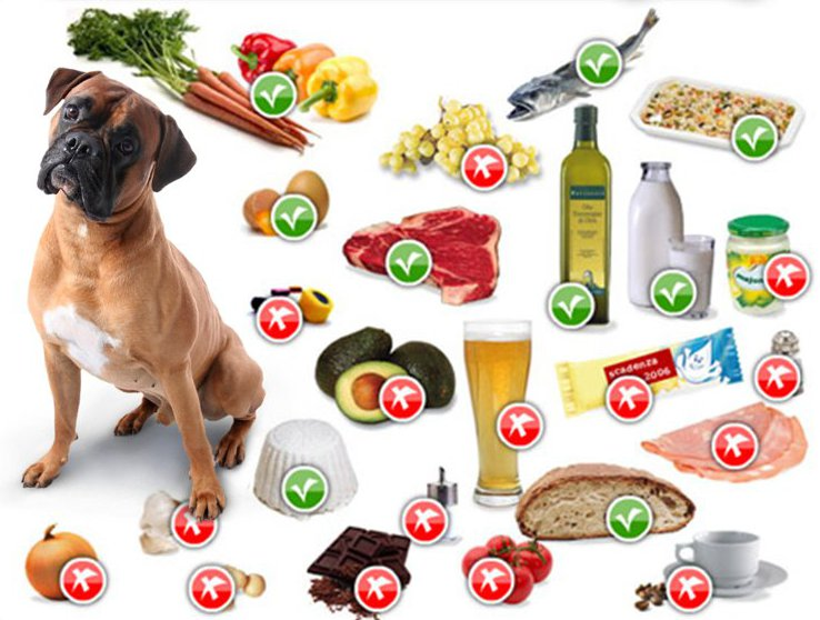 Liste des aliments dangereux pour le chien