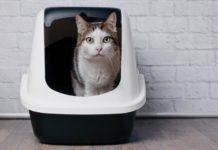 diarrhée chez le chat