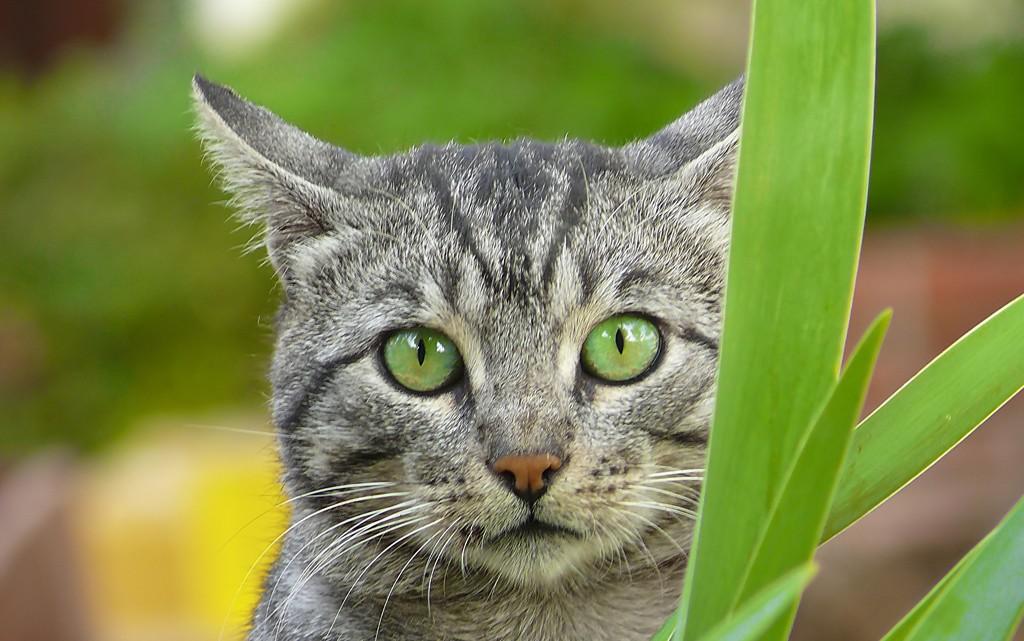 homéopathie chez le chat
