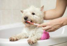 nettoyer les dents de votre chien naturellement
