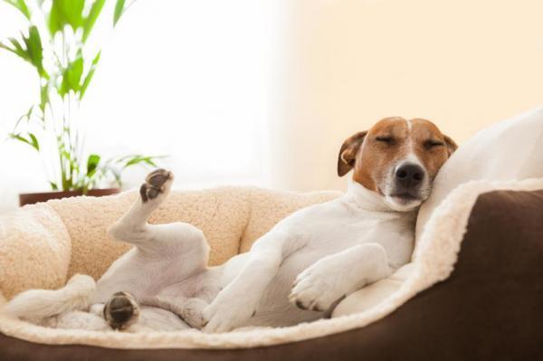 remedes homeopathiques pour chien