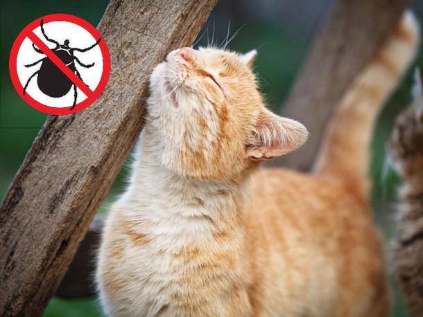 remedes naturels contre les puces du chat