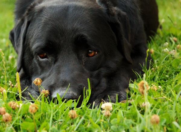 soin naturel pour mettre fin à la diarrhée chez le chien