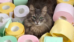 traitement et remedes naturels contre la diarrhée pour le chat