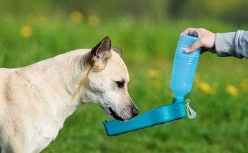 meilleurs accessoires et jouets pour chien