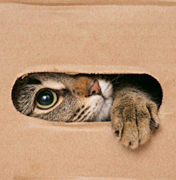 déménagement avec un chat