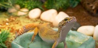 quel terrarium gecko