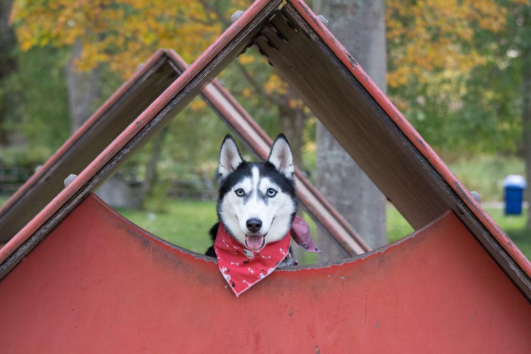 conseil pour choisir niche pour chien