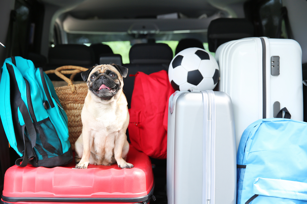 voyager chien voiture conseils
